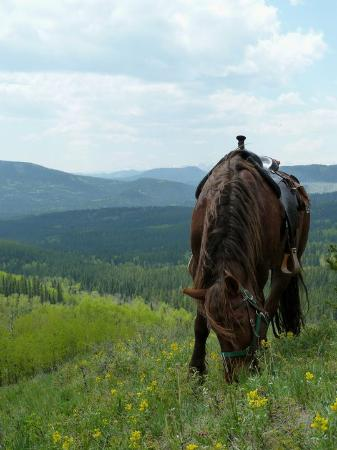 Moose Mountain Horseback Adventures - Day Tours: Day ride
