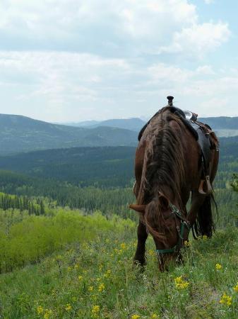 Bragg Creek, Canadá: Day ride