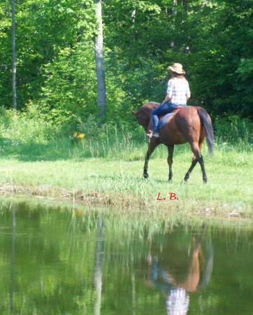 D & K Ranch: Reflection