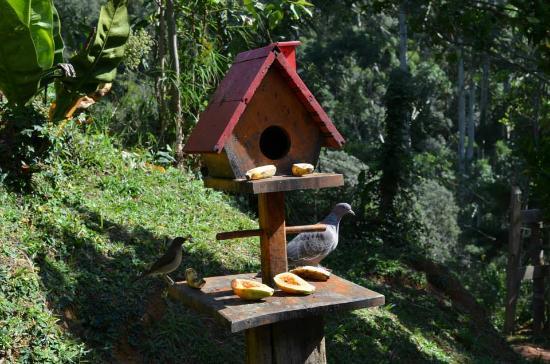 Pousada Moria: Visitas durante o café da manhã na pousada