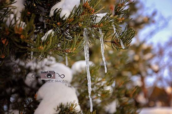 Blue Lake Ranch: Just an icicle :)