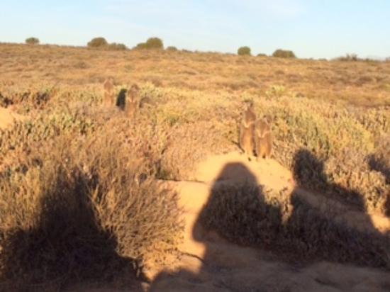 Mooiplaas Guesthouse: Meerkat trip