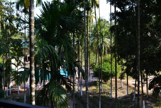 Infinity Resort Kaziranga: view of the vegetation around the swimming pool