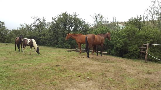 Van Reenen, Sudáfrica: Horses grazing while on a walk on the grounds