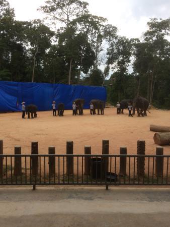 Kuala Berang, Malásia: Elephant Show