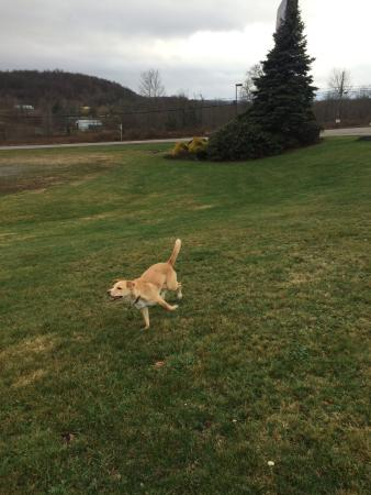Lake Ariel, PA: Sandy's fun time running in front of the hotel