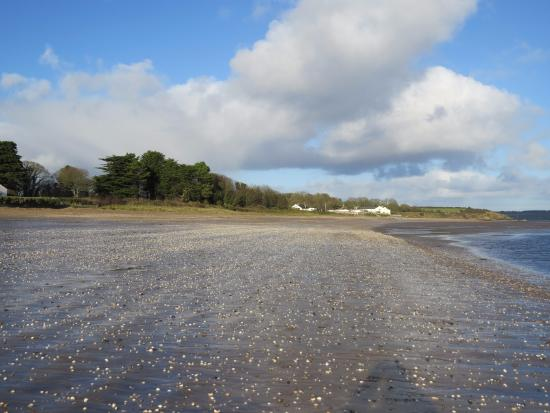Nothing but sea shells for company on a sunny December day on Woodstown Strand