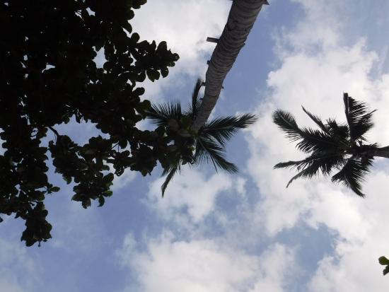 Coral View Resort Thailand : les cocotiers de la plage.