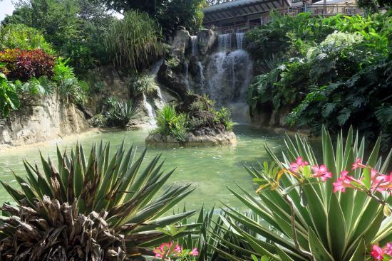 Perroquet photo de jardin botanique de deshaies - Jardin botanique guadeloupe basse terre ...
