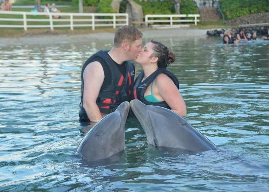 Dolphin Quest Big Island Reviews