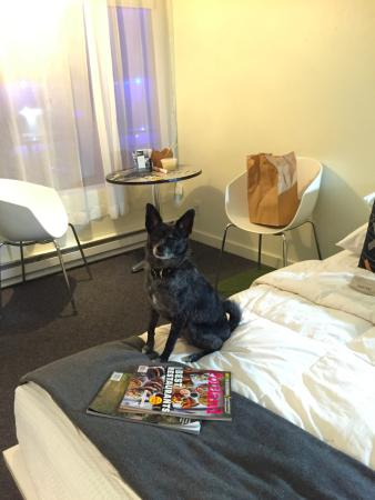 Jupiter Hotel: Dog wants some of the delicious take out from Biwa