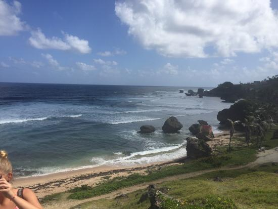 Viator Tours Barbados Reviews
