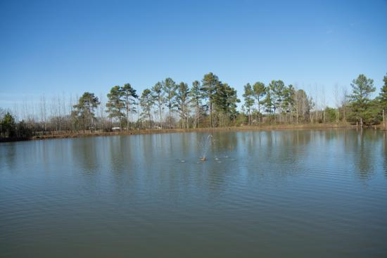 Yuma, TN: Pond and Pier