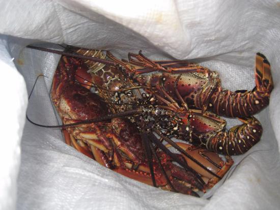 Hotel Corbiski EcoLodge: 夕食の伊勢海老と蟹