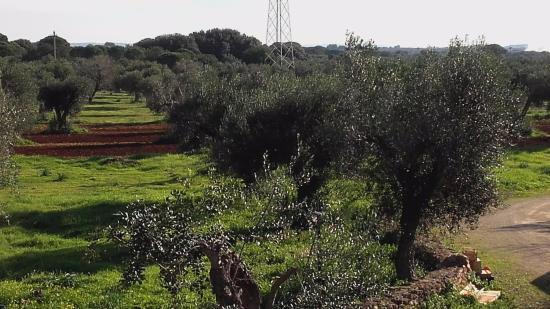 Tenuta Ferraro-Agriturismo: Parte della veduta della Tenuta