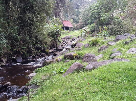 Truchas Selva Madre
