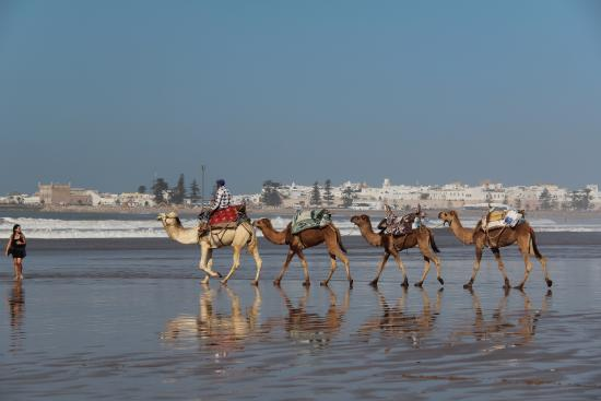 Ghazoua, Marruecos: The Beach in Essaouira