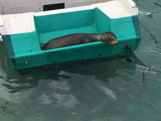 Puerto Villamil, Ekuador: photo5.jpg