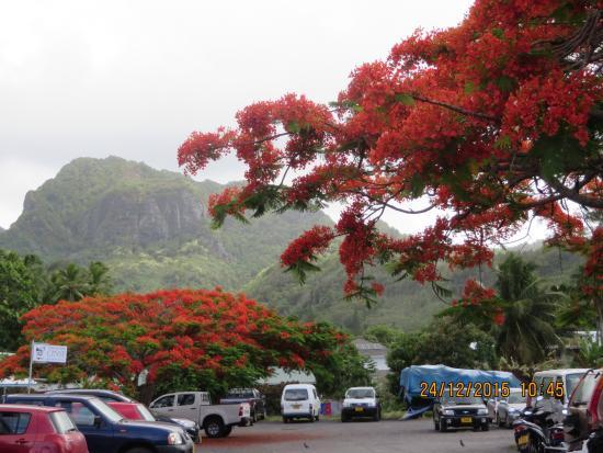 Cemetery In Rarotonga Picture Of The Edgewater Resort