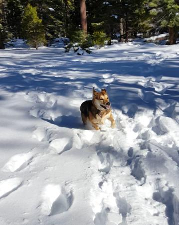 South Lake Tahoe, CA: My girl, zooming along in piles of snow.