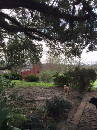 Glenfield Plantation Bed and Breakfast: Grounds of Glenfield