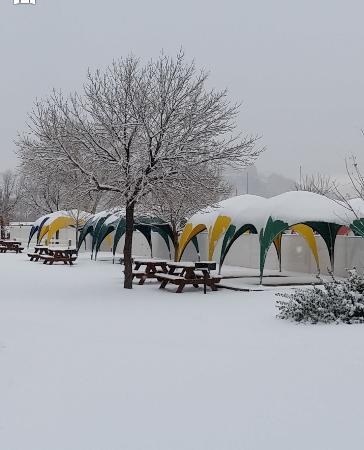 Moab Valley RV Resort & Campground: tent camping area