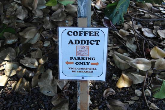 Kalaheo, Hawaje: The fun begins in the parking lot...