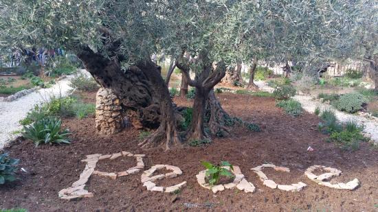 Peace Picture of Garden of Gethsemane Jerusalem TripAdvisor