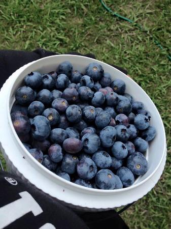 Blueberry Corner: yumm blueberries
