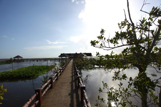 Thale Noi Waterbird Park: Another view