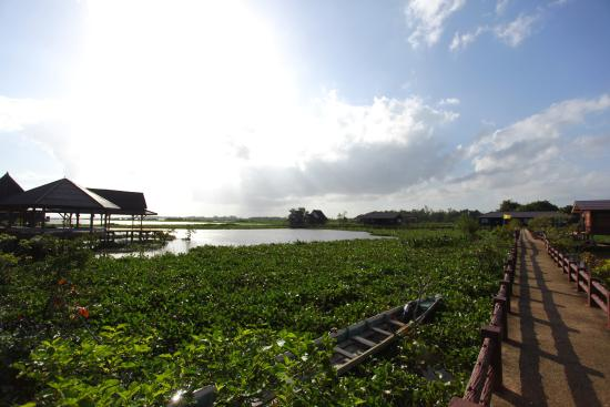 Thale Noi Waterbird Park: View of the lake