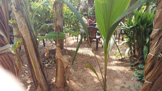 V Resorts - The Bohemian Masala: Precioso y cuidado lugar