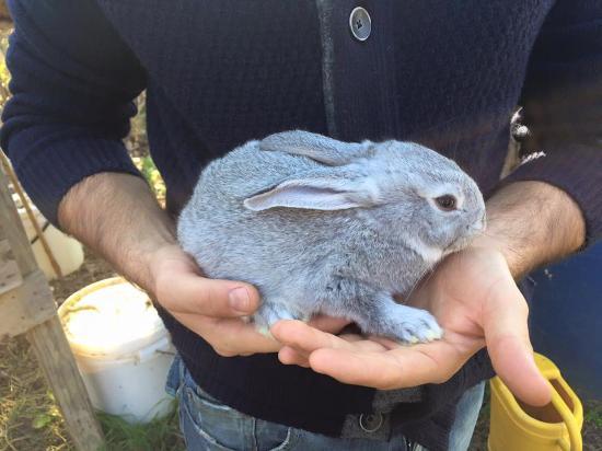 Country House Croce di Bibbiano: coniglietto dell'agriturismo