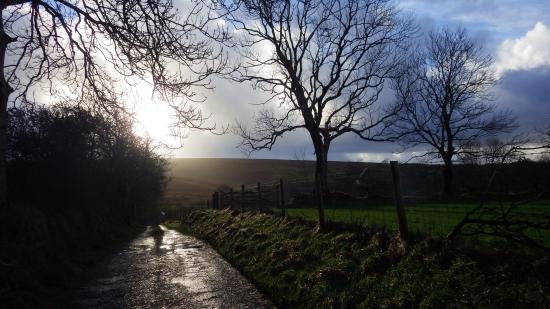 Llanllwni, UK: Driveway to Blaendyffryn Fach