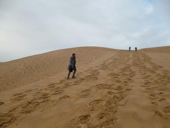 vu de la dune picture of dune du pilat la teste de buch tripadvisor. Black Bedroom Furniture Sets. Home Design Ideas