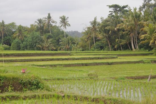 The Chedi Club Tanah Gajah, Ubud, Bali – a GHM hotel: View of surrounding area