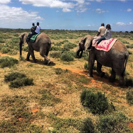 Sidbury, Zuid-Afrika: Lovely Elephant Safari across the road at their Sanctuary