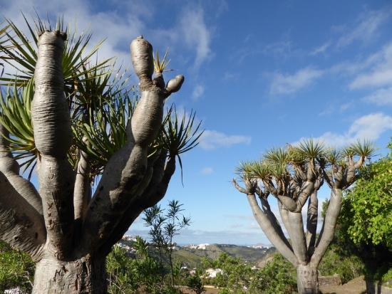 Jard n botanico picture of jardin canario las palmas de - Jardin botanico las palmas ...