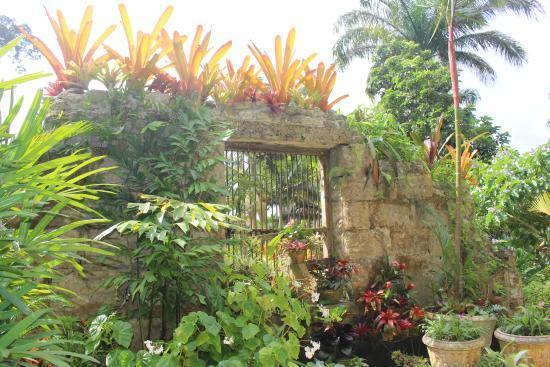 Barbados Wildlife Reserve: Garten