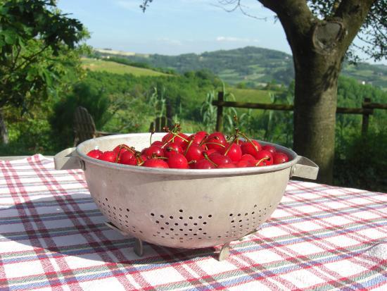 Calamandrana, Italia: Freshly picked fruits are available in season.