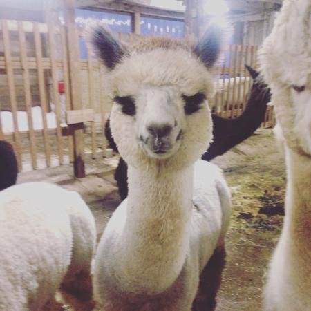 Sabamba Alpaca Ranch and Bed & Breakfast