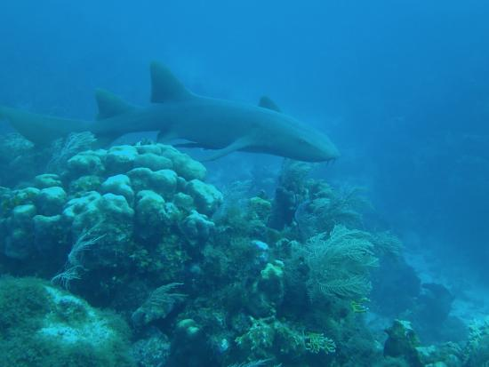 Advanced Open Water Course Wreck Dive With Ben Foto De Living The Dream Di