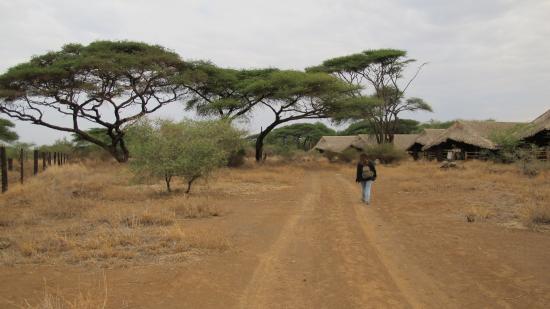 Kibo Safari Camp: camp