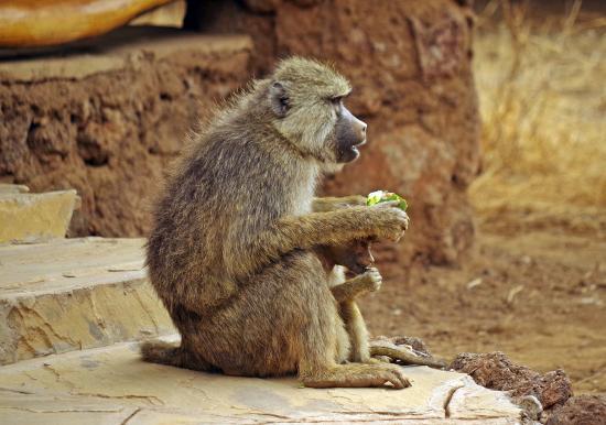 Kibo Safari Camp: simpatici ospiti!!