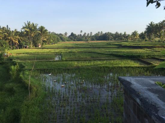 View Of Rice Paddies From The Vila Picture Of Luxe Villas Bali Ubud Tripadvisor
