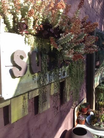 Succulent Cafe: sign