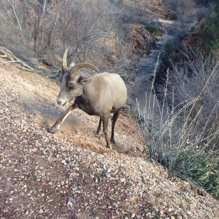 Red Mountain Resort: Wildlife in Zion National Park