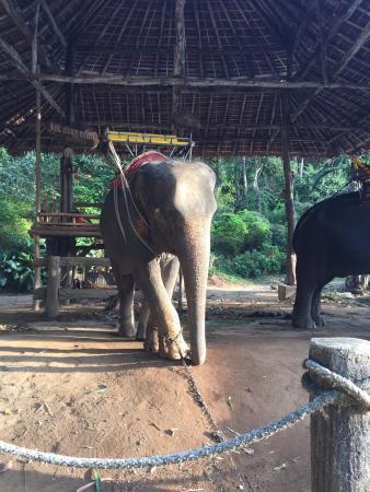 Kok Chang Safari Elephant Trekking: photo3.jpg