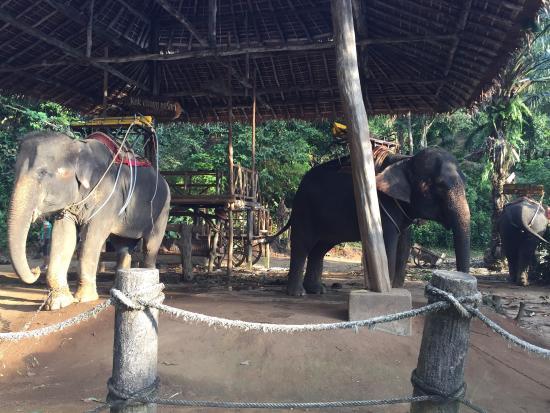 Kok Chang Safari Elephant Trekking: photo4.jpg