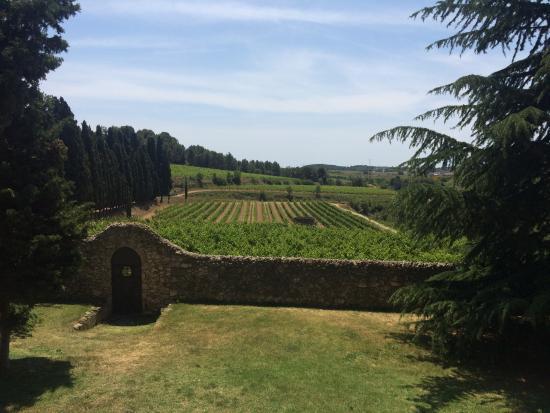 Sant Pau d'Ordal, Spanien: Vindruvsodlingen på Albet i Noya´s vingård